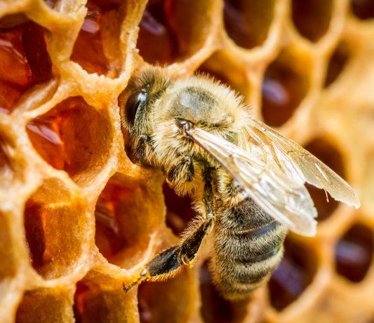 honey bee apiary beeswax business name ideas