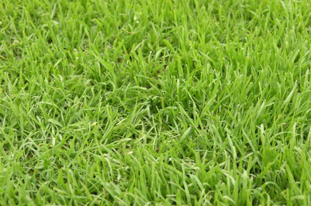 lawn care business name ideas