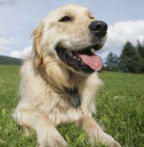 dog fence business names